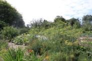 Fenchel (mit der gelben Blüte)